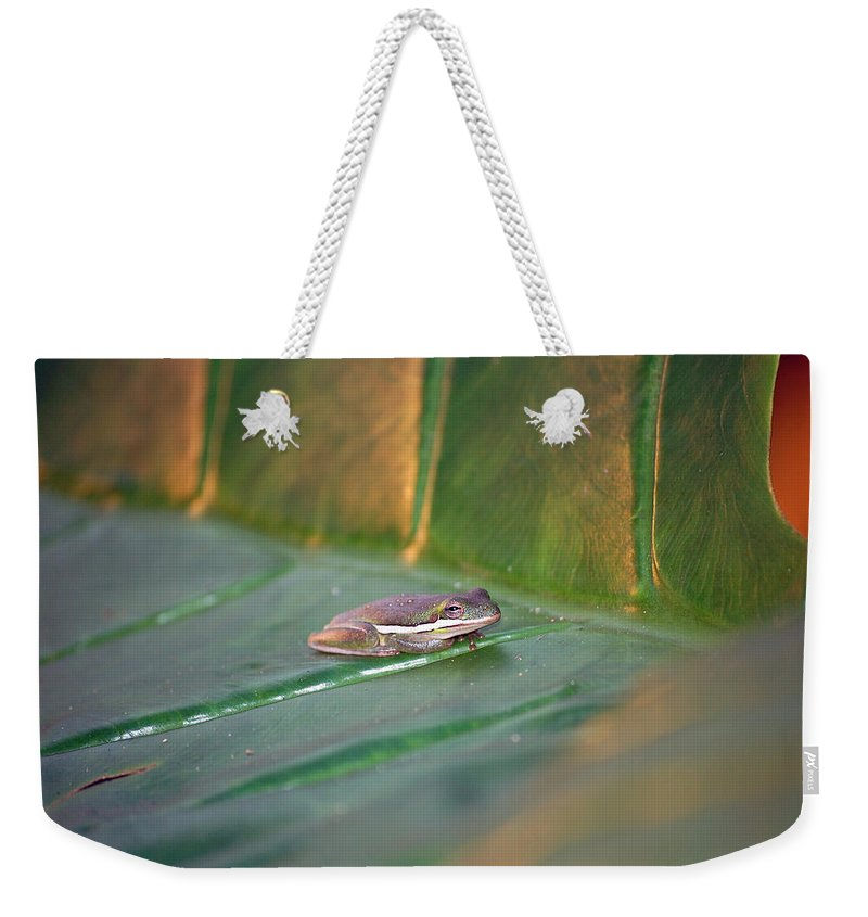 Frog Weekender Tote Bag featuring the photograph Tree Frog IIi by Robert Meanor