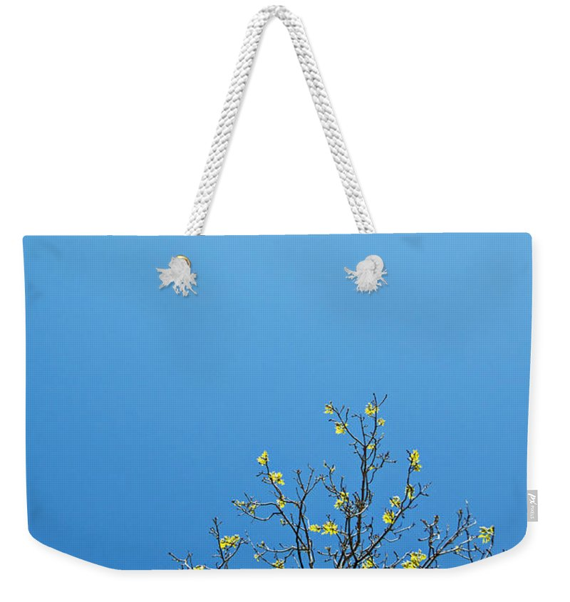 Tree Weekender Tote Bag featuring the photograph Tree In Spring by Scott Sawyer