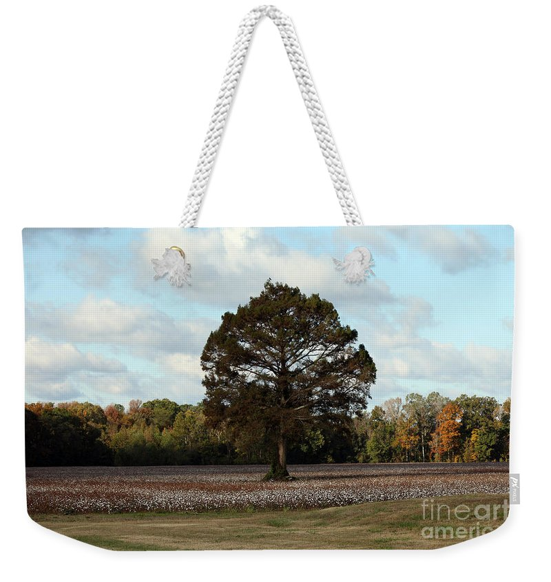 Tree Weekender Tote Bag featuring the photograph Tree No Fog by Amanda Barcon