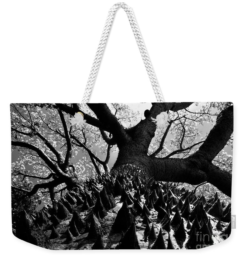 Tree Weekender Tote Bag featuring the photograph Tree Of Thorns B by David Lee Thompson