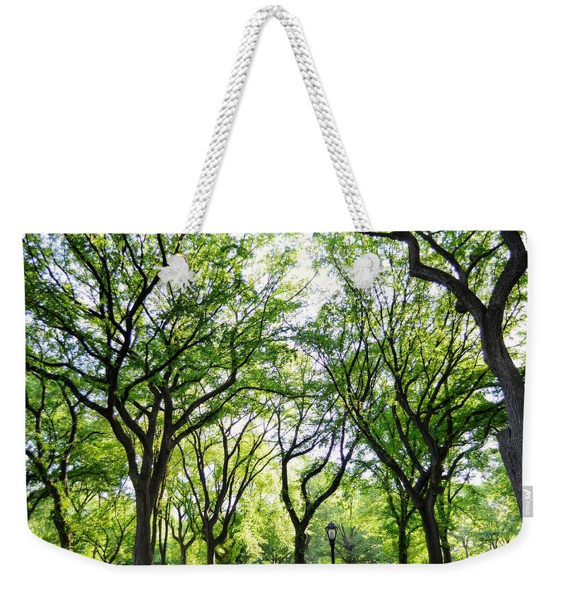 Central Park Weekender Tote Bag featuring the photograph Trees Of Central Park, Nyc by Bob Cuthbert