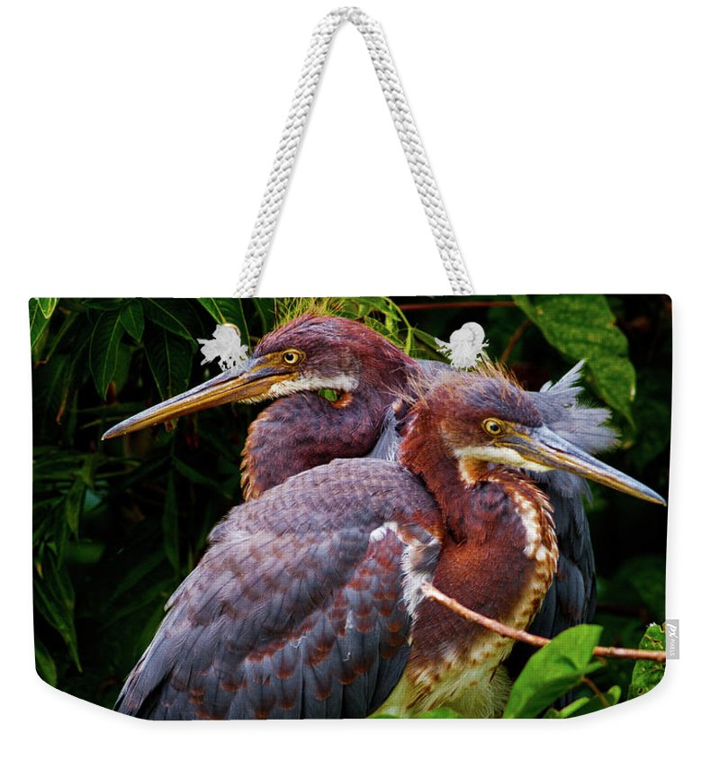 Birds Weekender Tote Bag featuring the photograph Tricolored Siblings by Christopher Holmes