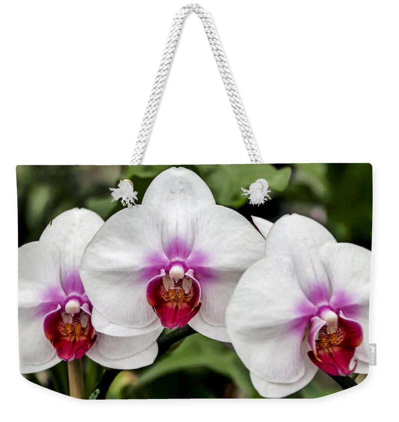 Pink Weekender Tote Bag featuring the photograph Trio Of Beautiful Flowers by Bob Slitzan