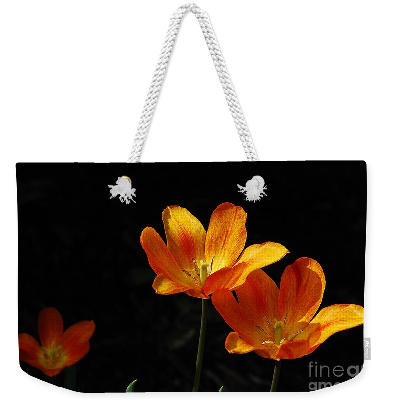 Tulips Weekender Tote Bag featuring the photograph Triples by Lois Bryan