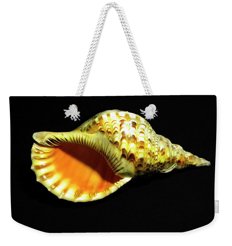 Frank Wilson Weekender Tote Bag featuring the photograph Triton Trumpet Seashell Cymatium Tritonis by Frank Wilson
