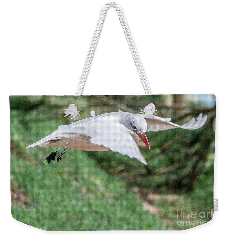 Bird Weekender Tote Bag featuring the photograph Tropic Bird by Werner Padarin