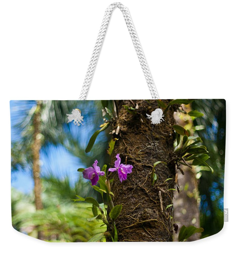 Tropical Weekender Tote Bag featuring the photograph Tropical Beauty by Mike Reid