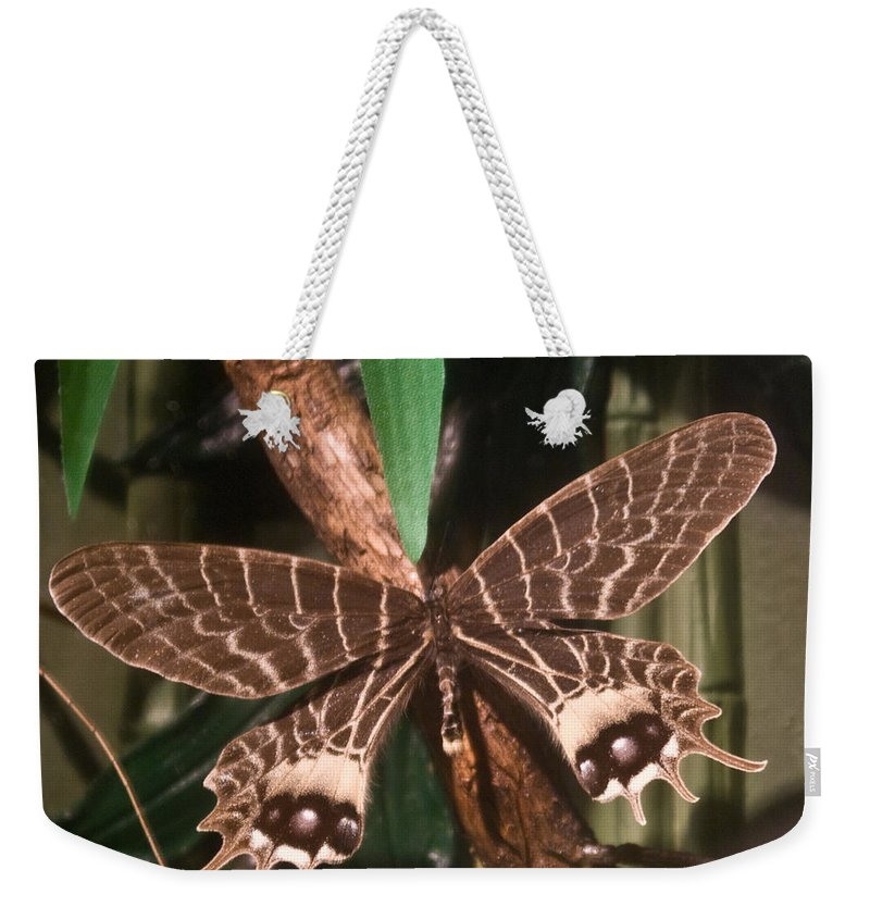Butterfly Weekender Tote Bag featuring the photograph Tropical Butterfly by Douglas Barnett