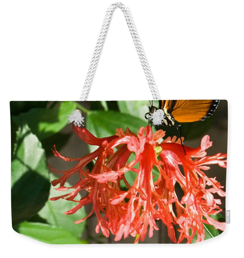 Tropical Weekender Tote Bag featuring the photograph Tropical Butterfly On Flower by Douglas Barnett
