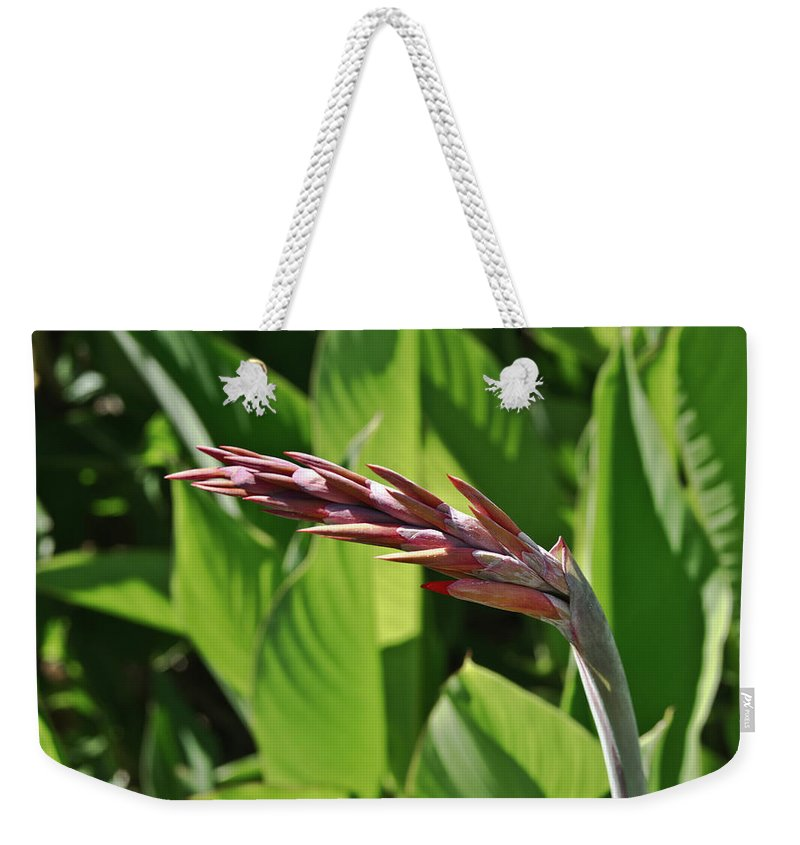 Tropical Weekender Tote Bag featuring the photograph Tropical Flower Buds by Douglas Barnett