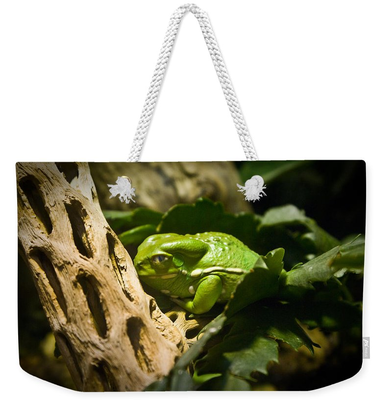 Amphibian Weekender Tote Bag featuring the photograph Tropical Green Frog by Douglas Barnett