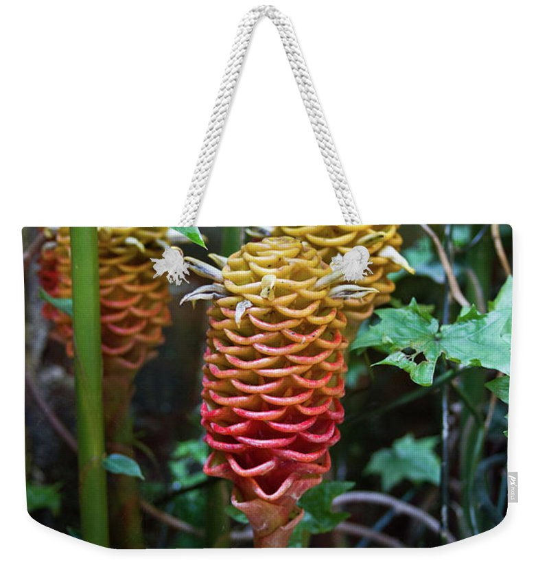 Tropical Weekender Tote Bag featuring the photograph Tropical Mystery Plant by Douglas Barnett