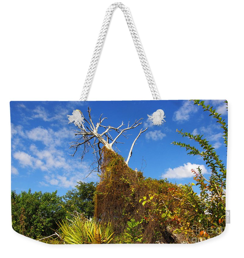 Weekender Tote Bag featuring the photograph Tropical Plants In A Preserve In Florida by Zal Latzkovich