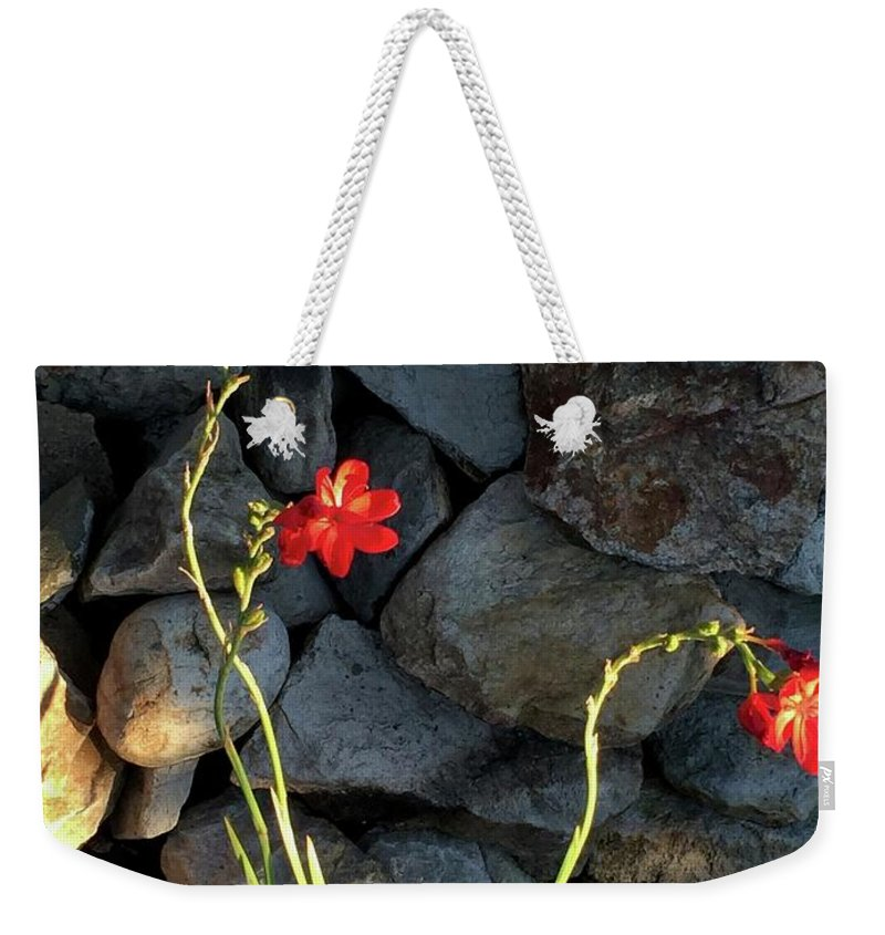 Tropical Lilies Weekender Tote Bag featuring the photograph Tropical Threesome by Kimberley Vico