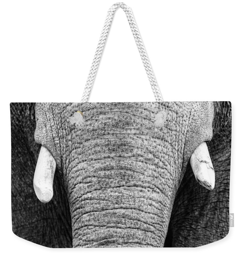 Elephant Weekender Tote Bag featuring the photograph Trunk And Tusks by Rand