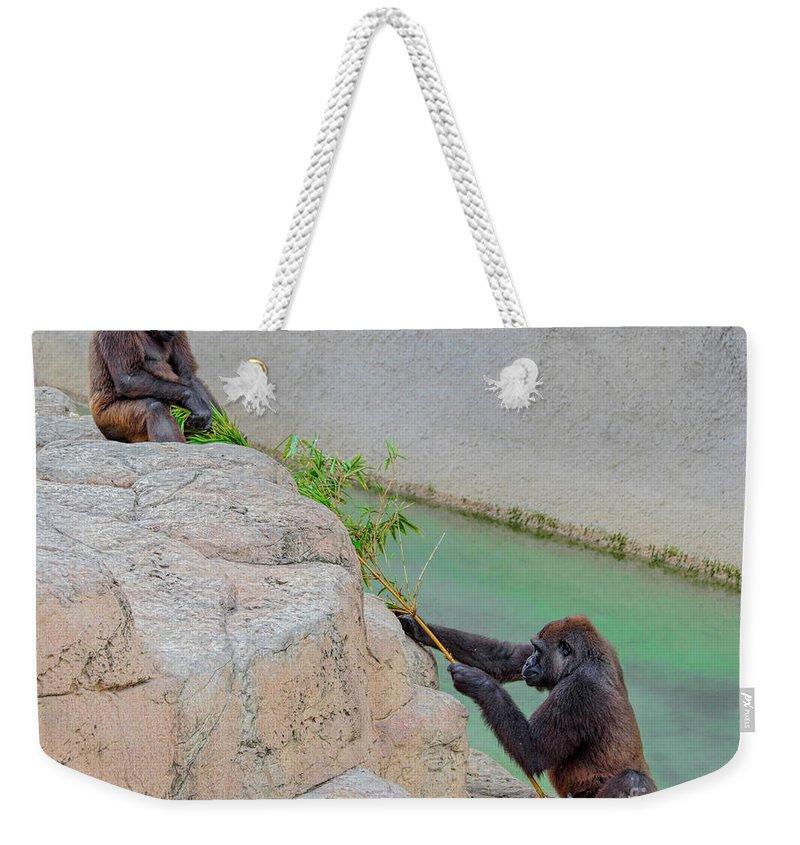 Gorilla Weekender Tote Bag featuring the photograph Tug-o-war Western Gorillas by TN Fairey
