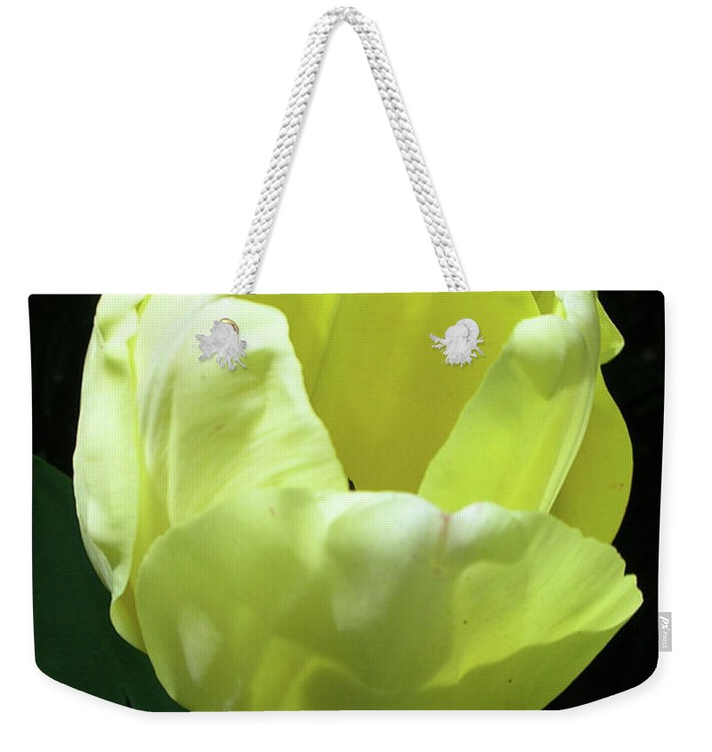 Flowers Weekender Tote Bag featuring the photograph Tulip 0755 by Guy Whiteley