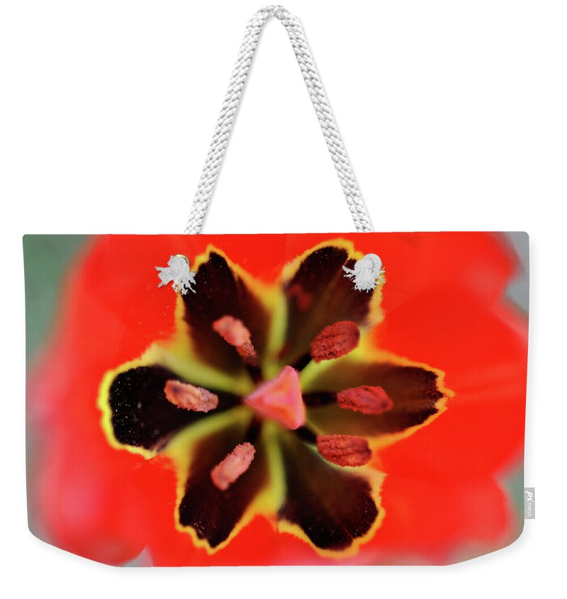 Tulip Weekender Tote Bag featuring the photograph Tulip At Amatzia Forest - 4 by Dubi Roman