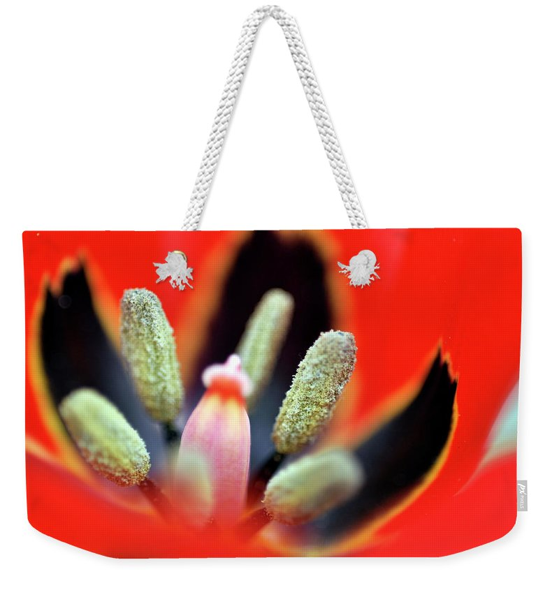 Tulip Weekender Tote Bag featuring the photograph Tulip At Amatzia Forest - 5 by Dubi Roman