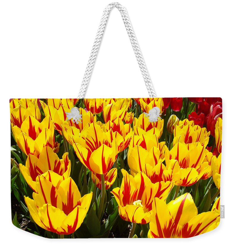 Tulip Weekender Tote Bag featuring the photograph Tulip Flowers Festival Yellow Red Art Prints Tulips by Baslee Troutman