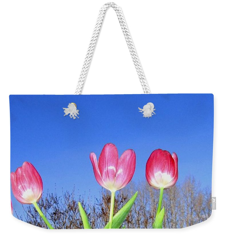 Tulips Weekender Tote Bag featuring the photograph Tulip Panorama by Will Borden