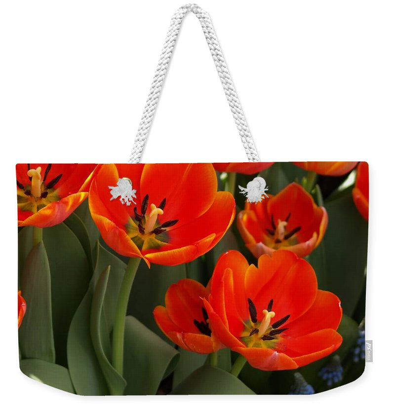 Ann Keisling Weekender Tote Bag featuring the photograph Tulip Power by Ann Keisling