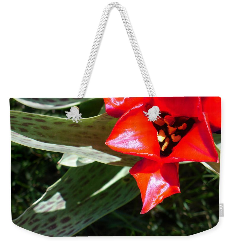 Tulip Weekender Tote Bag featuring the photograph Tulip by Steve Karol