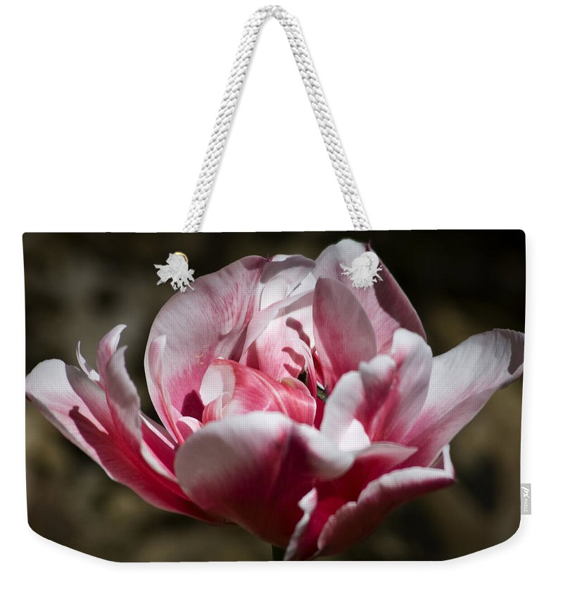 Tulip Weekender Tote Bag featuring the photograph Tulip Surprise by Teresa Mucha