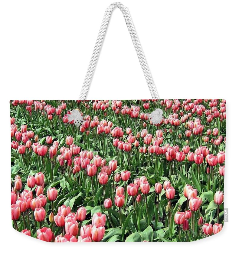 Agriculture Weekender Tote Bag featuring the photograph Tulip Town 14 by Will Borden