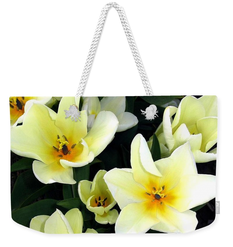 Agriculture Weekender Tote Bag featuring the photograph Tulip Town 16 by Will Borden