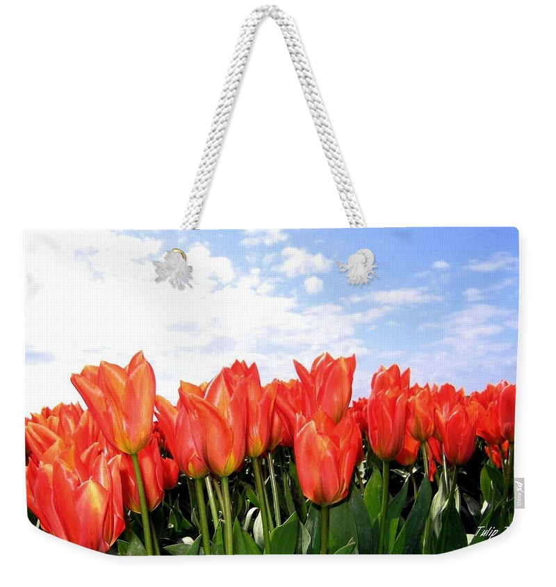 Agriculture Weekender Tote Bag featuring the photograph Tulip Town 17 by Will Borden