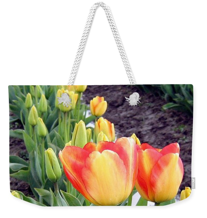 Agriculture Weekender Tote Bag featuring the photograph Tulip Town 6 by Will Borden