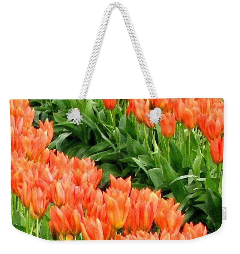 Agriculture Weekender Tote Bag featuring the photograph Tulip Town 7 by Will Borden