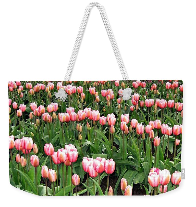 Agriculture Weekender Tote Bag featuring the photograph Tulip Town 8 by Will Borden