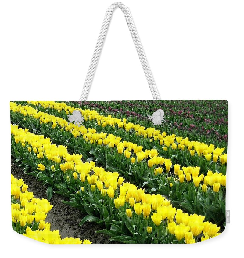 Agriculture Weekender Tote Bag featuring the photograph Tulip Town 9 by Will Borden