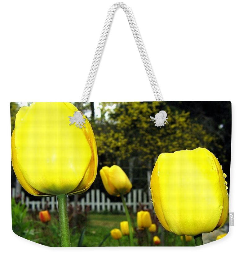 Tulips Weekender Tote Bag featuring the photograph Tulipfest 8 by Will Borden