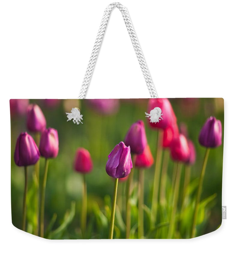 Tulip Weekender Tote Bag featuring the photograph Tulips Dream by Mike Reid