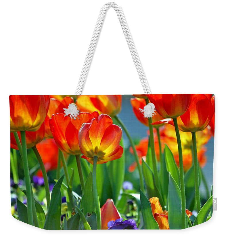 Flowers Weekender Tote Bag featuring the photograph Tulips by Robert Meanor