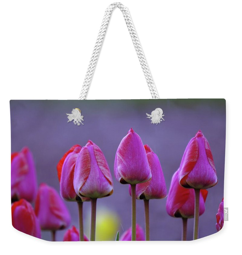 Tulips Weekender Tote Bag featuring the photograph Tullips by Jeff Swan