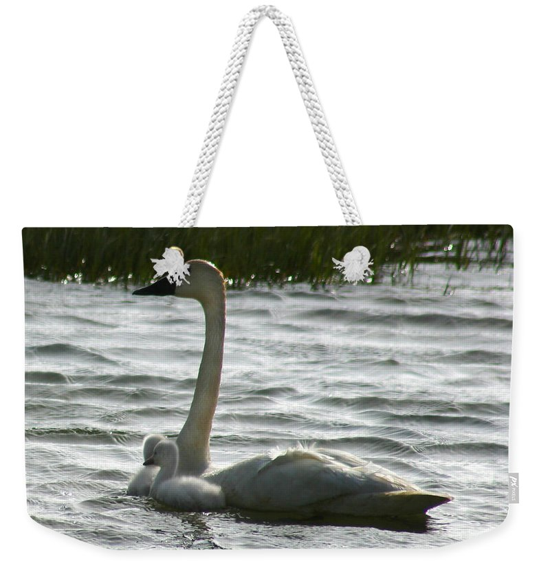 Swans Weekender Tote Bag featuring the photograph Tundra Swan And Signets by Anthony Jones