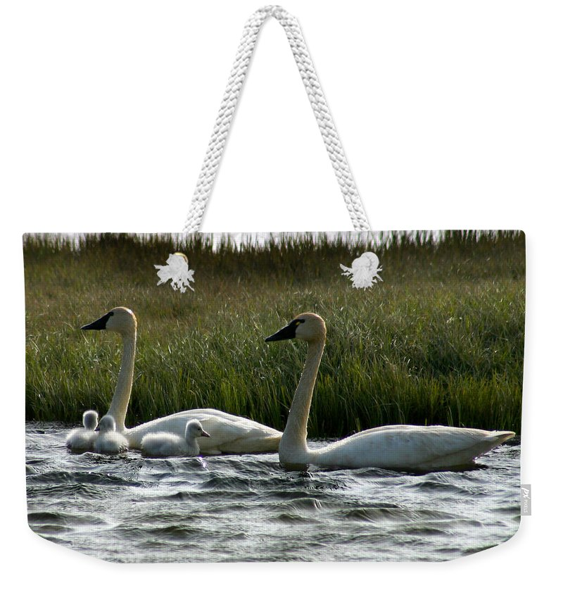 Swans Weekender Tote Bag featuring the photograph Tundra Swans And Cygents by Anthony Jones
