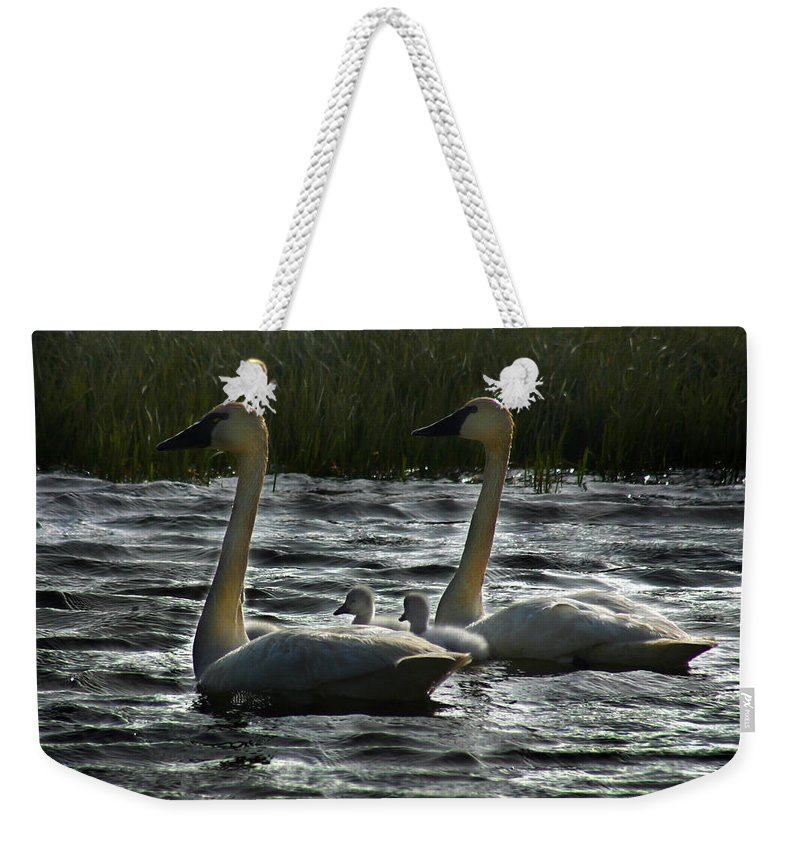 Tundra Swans Weekender Tote Bag featuring the photograph Tundra Swans by Anthony Jones