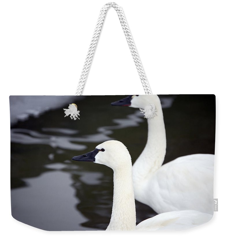 Swans Weekender Tote Bag featuring the photograph Tundra Swans by Lisa Kane