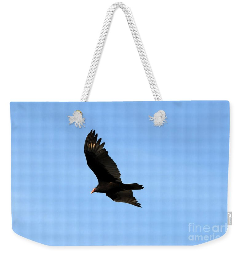 Turkey Vulture Weekender Tote Bag featuring the photograph Turkey Vulture by David Lee Thompson