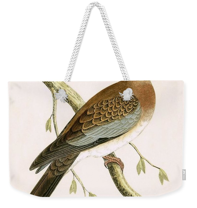Bird Weekender Tote Bag featuring the painting Turtle Dove by English School
