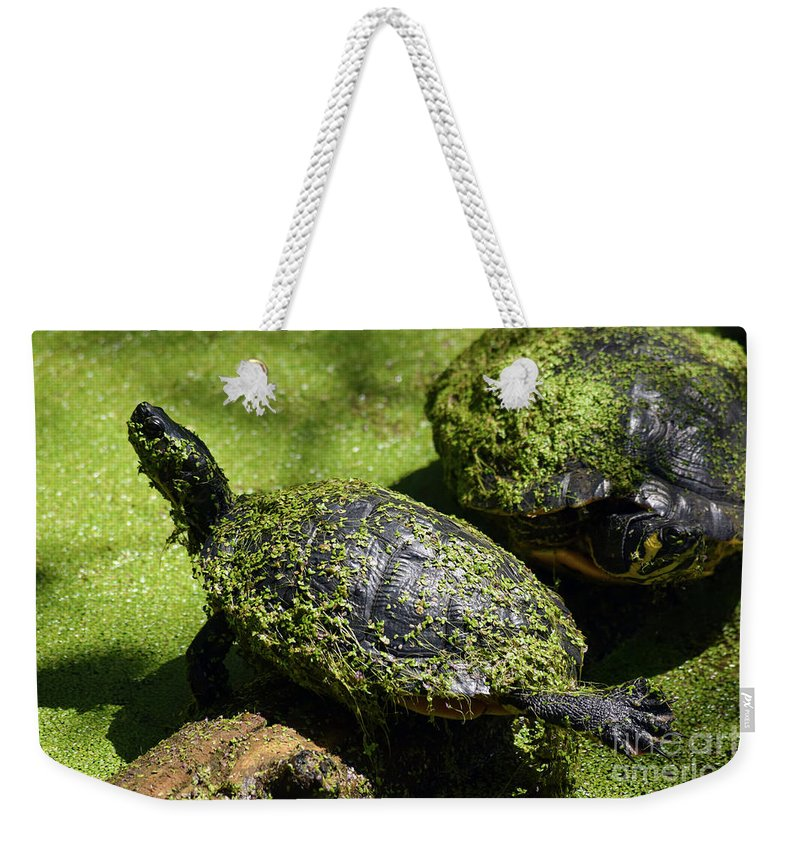 Turtle Yoga Weekender Tote Bag featuring the photograph Turtle Yoga by William Tasker
