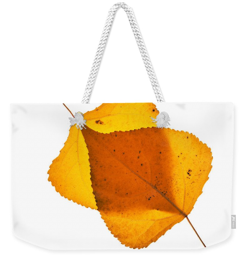 Cottonwood Leaves Weekender Tote Bag featuring the photograph Two Backlit Cottonwood Leaves In Autumn On White by Vishwanath Bhat