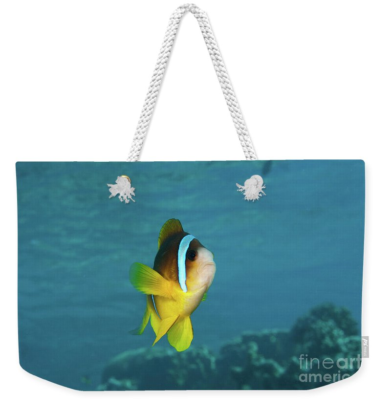 Coral Weekender Tote Bag featuring the photograph Two-banded Clownfish by Hagai Nativ