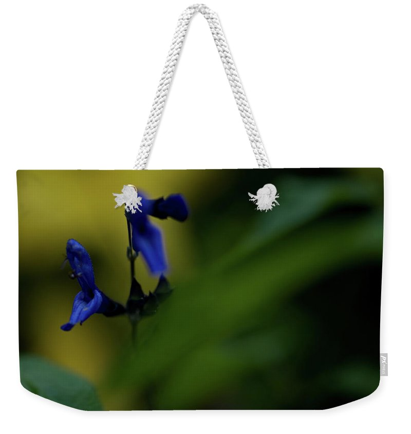 wild Flowers Weekender Tote Bag featuring the photograph Two Blue by Paul Mangold