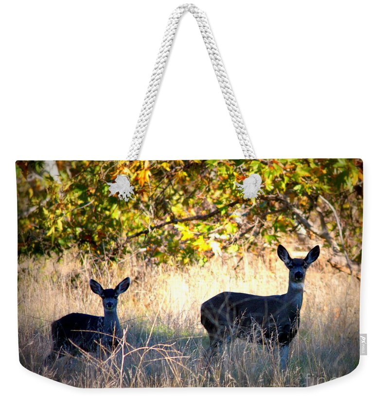 Animal Weekender Tote Bag featuring the photograph Two Deer In Autumn Meadow by Carol Groenen